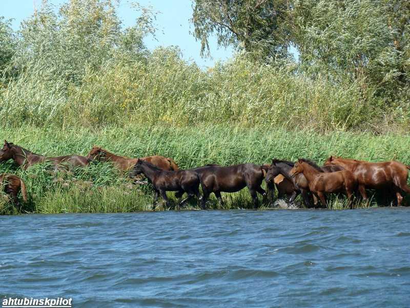 Решение об организации на территории Астраханской области природного парка «Волго-Ахтубинское междуречье» принято