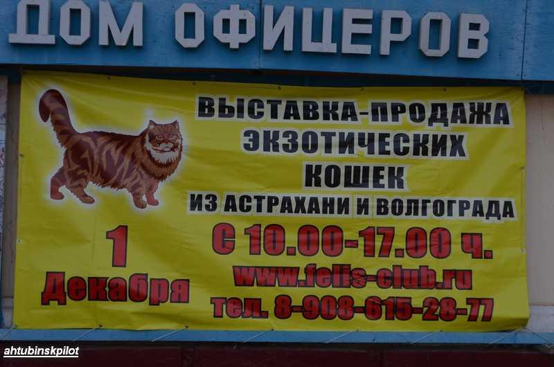 В Ахтубинске прошел конкурс красоты…среди кошек