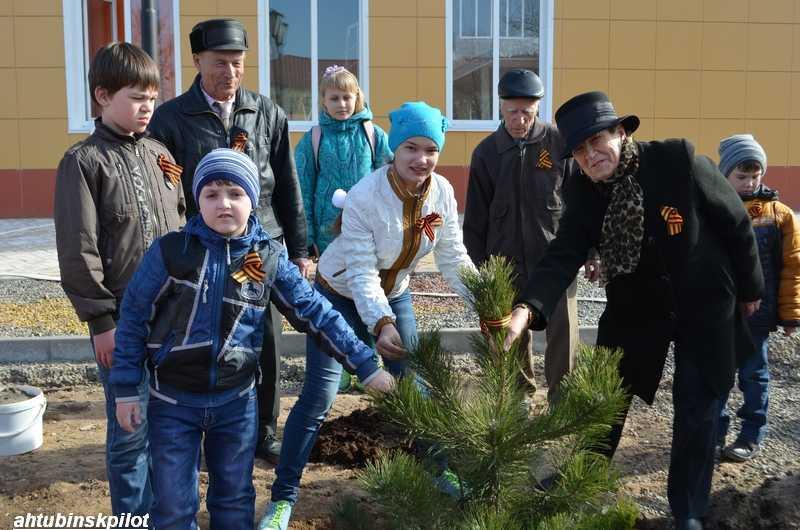На аллее Памяти высадили крымские сосны