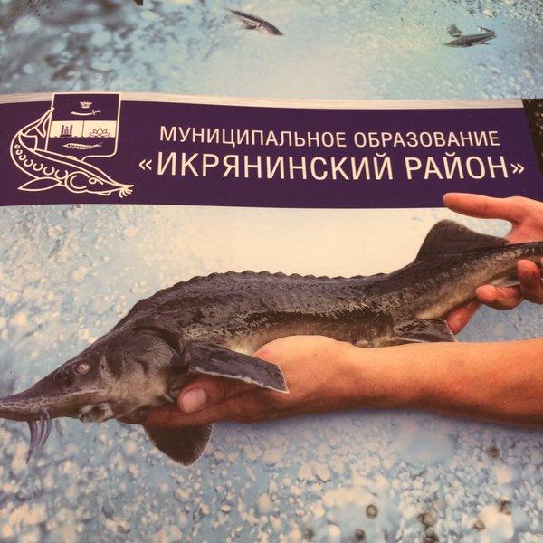 Икрянинский район Астраханской области победил в народном голосовании национальной бизнес-премии