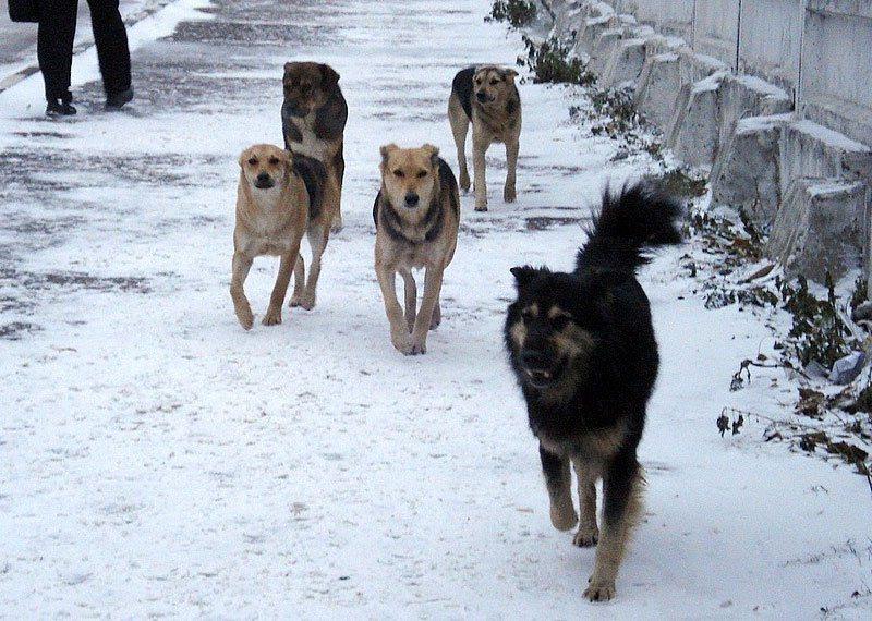 Картинки по запросу отлов собак