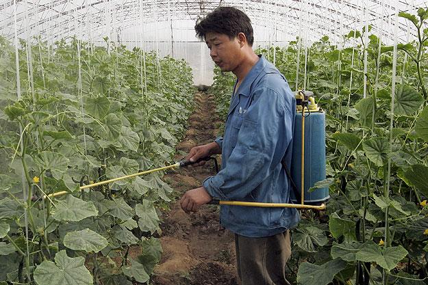 Опасные для жизни овощи, которые выращивали в Волгоградской области, могут попасть на стол ахтубинцам