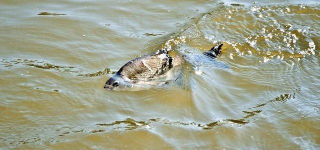 Рыбу уже не спасти. Но Волгоградская ГЭС добавит Астраханской области немного воды