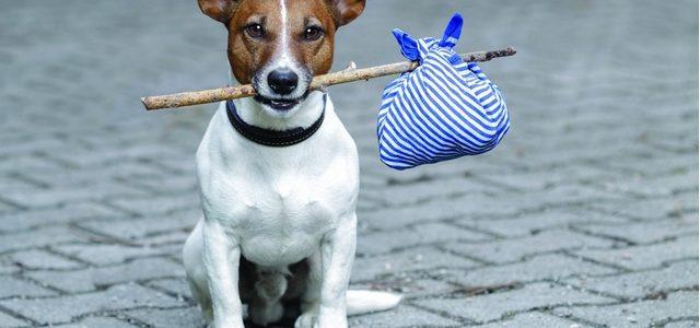 Собаки бывают кусачие. А что тогда делать людям?