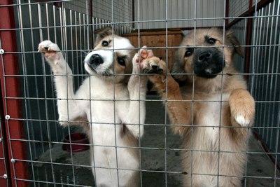 Первых бродячих собак оправили на стерилизацию