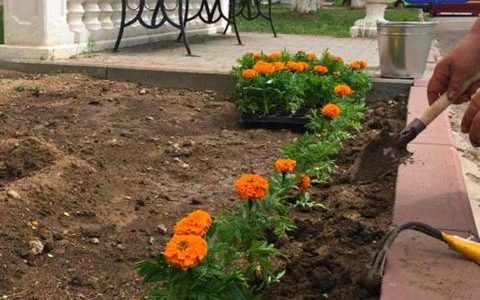 Около 6 тысяч цветов высадят в Ахтубинске