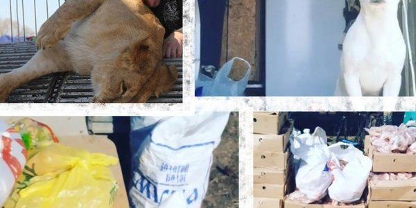 В Ахтубинске из-за карантина застрял передвижной цирк, люди несут животным продукты