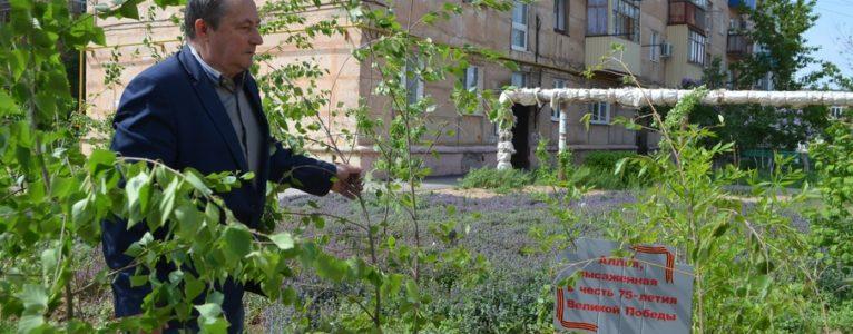 На территории городской школы высадили аллею в честь 75- летия Великой Победы
