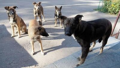 Отловом бродячих собак в Ахтубинском районе будет заниматься местный подрядчик